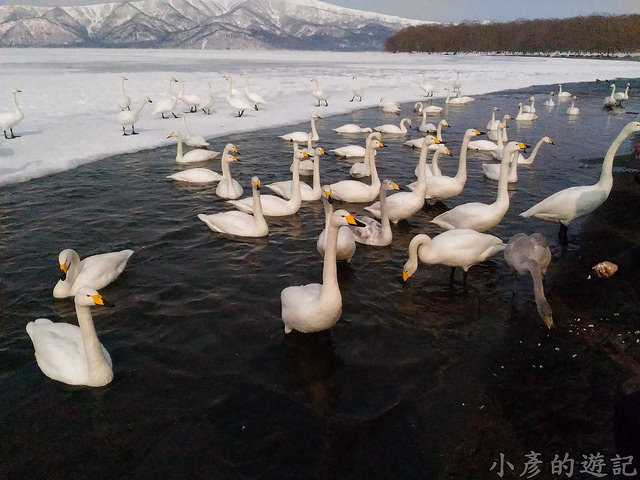 S_Snow_1119