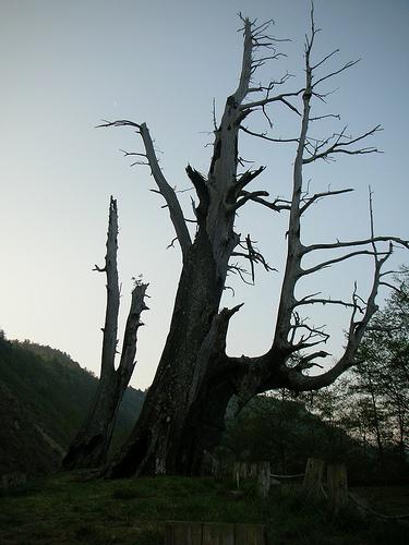 夫妻樹 (by ShuLin)