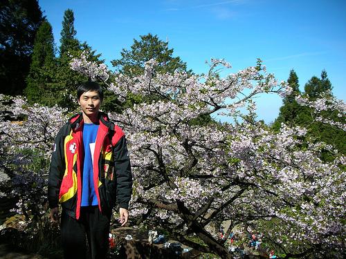 第二管制站對面櫻花