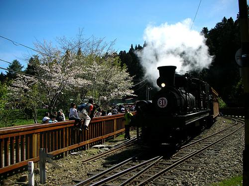 蒸氣火車與櫻花