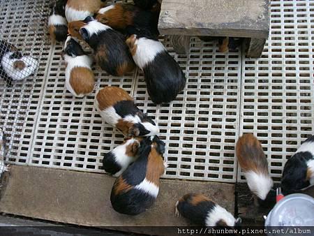 宜農牧場有天筑鼠
