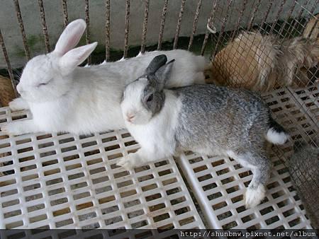宜農牧場有兔子