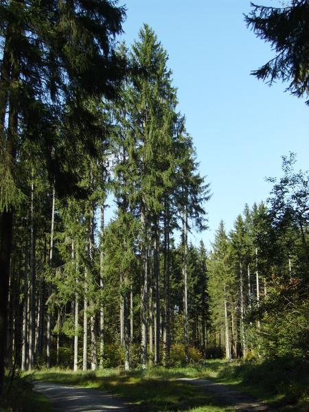 Forstenriedforst