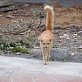 超撒嬌的鹿港小野貓