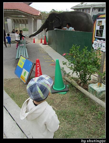 121103 3Y0M c 沖繩兒童王國 zoo (43)