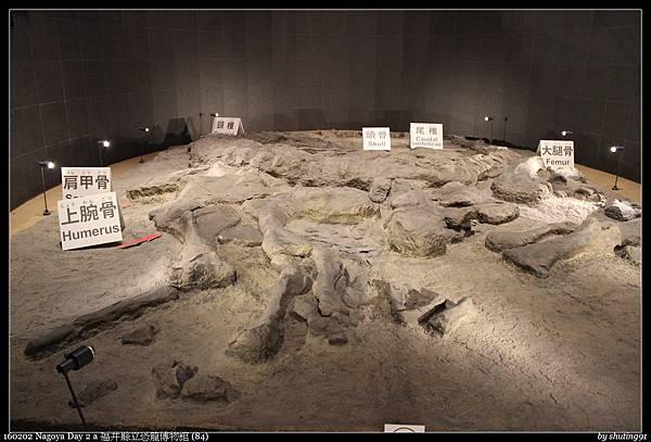 160202 Nagoya Day 2 a 福井縣立恐龍博物館 (84).jpg