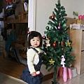 屬於小安安的聖誕樹