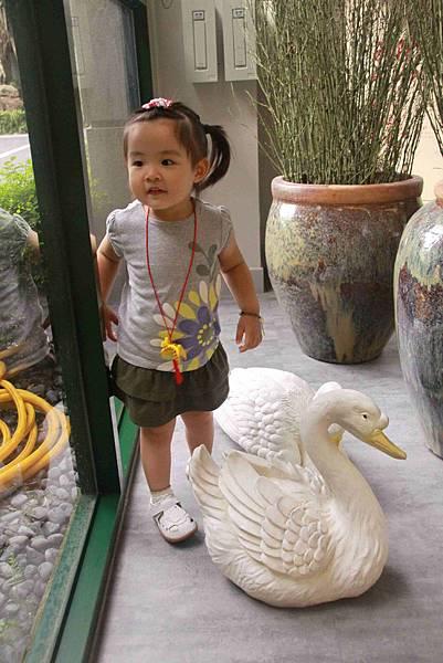 這是大白鵝嗎?