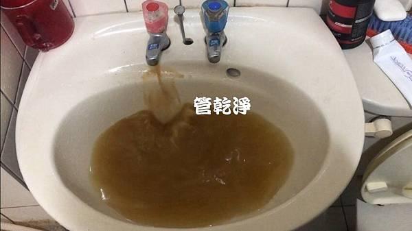 taoyungturtul001.jpg