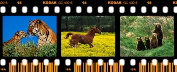 動物親子組圖