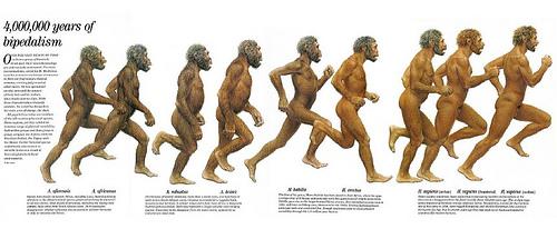 成長、演化