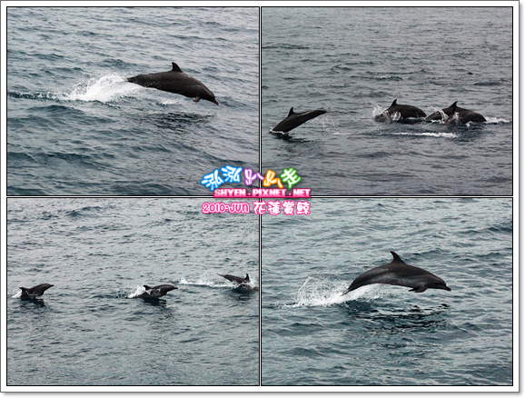 泓泓賞鯨『趣』