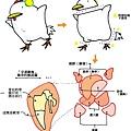 炸雞.jpg