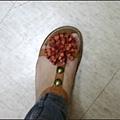 拖鞋花-2.jpg