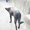 狗.JPG