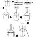 甲蟲1.jpg