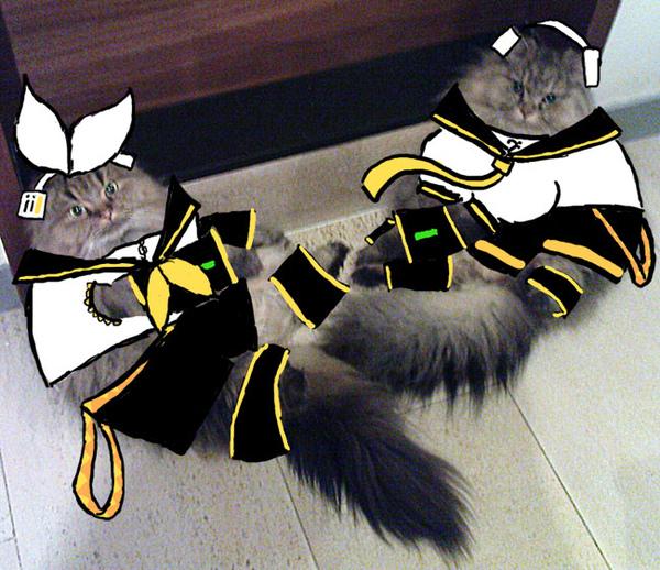貓音雙子.jpg