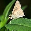 DSC05012 褐弄蝶.jpg