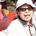 DSC01723 折衷鸚鵡.jpg