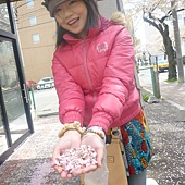 滿地的櫻花