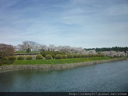 圍著個護城河與櫻花樹