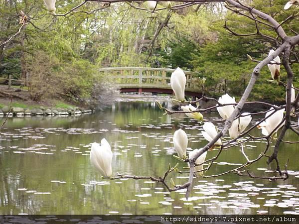 北海道道廳的庭院