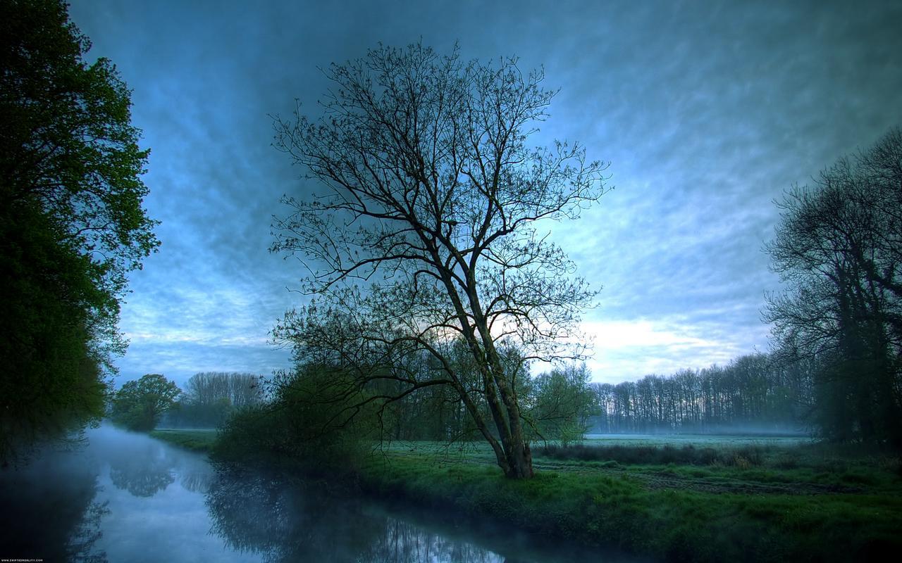 Silence_Forest_1280x800.jpg