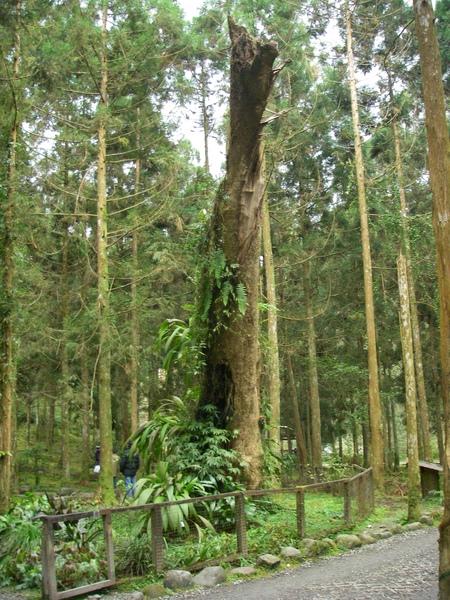 林下植物展示區