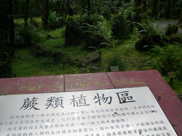 蕨類植物區