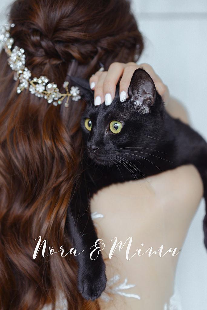 婚攝琪琪小姐 台北貓咪婚紗 輕婚紗 貓咪寫真