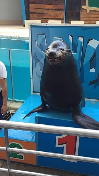 微笑的海獅