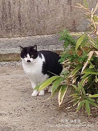 大阪城的貓