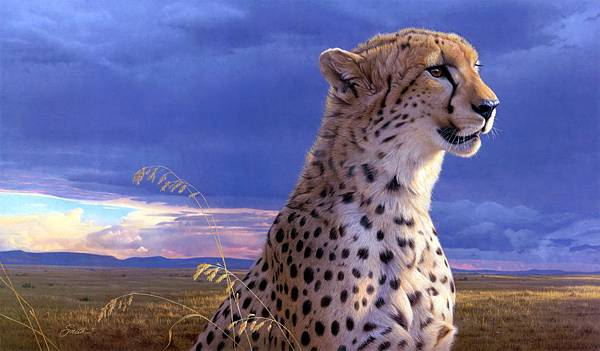 a-cheetah-awaits-the-storm
