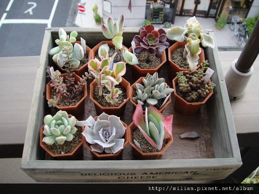 2011623 池袋西武鶴仙園