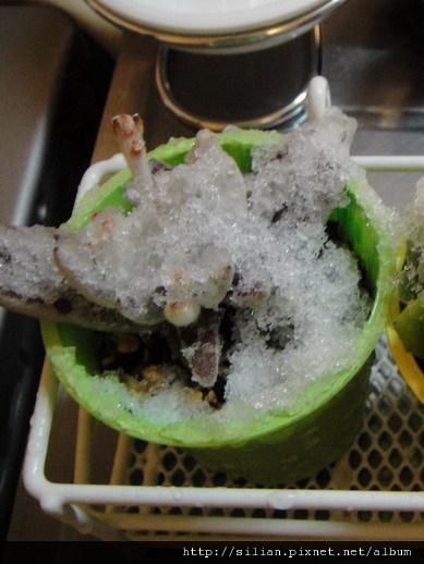 2010/2/1 東京下雪了 福兔耳 / Kalanchoe eriophylla