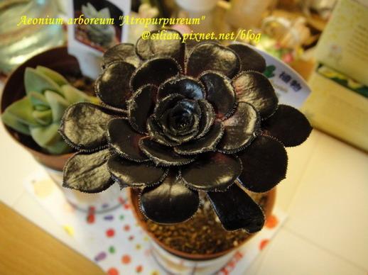 2011/8/2 購於Lazona 黑到發亮的黑法師