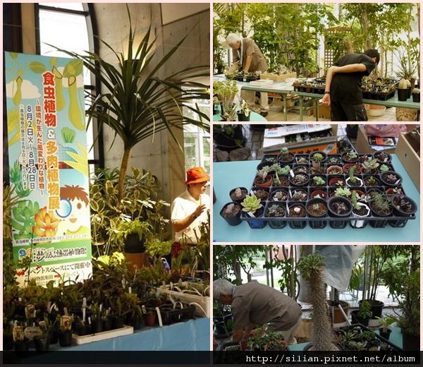 20110820 夢之島多肉食蟲植物展    09.jpg