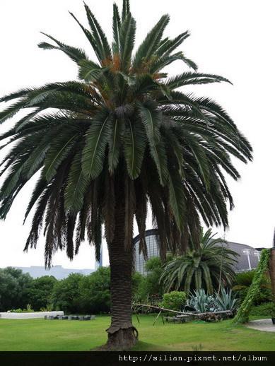 20110820 夢之島多肉食蟲植物展