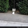 參道上的貓