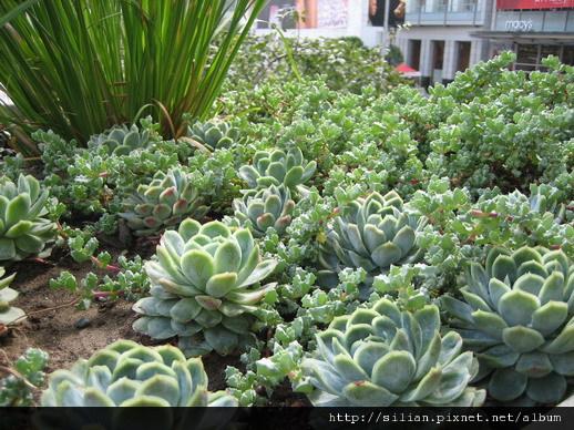 令我驚訝的看到多肉植物的花圃,多肉們都生長的好有精神喔~