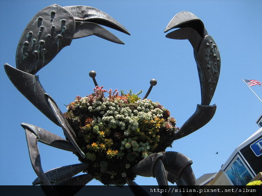 多肉蟹~沒有想到會在舊金山看到多肉,真是開心。