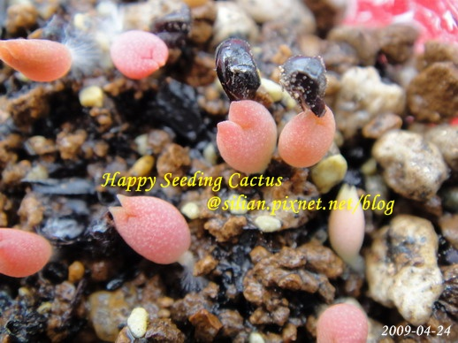 Happy Seeding Cactus