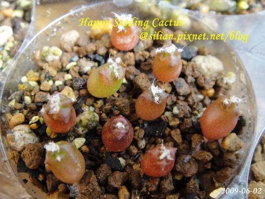 Happy Seeding Cactus
