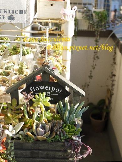 20110829 小木屋多肉組合盆栽