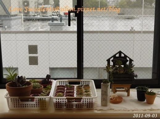 20110903 第12號颱風