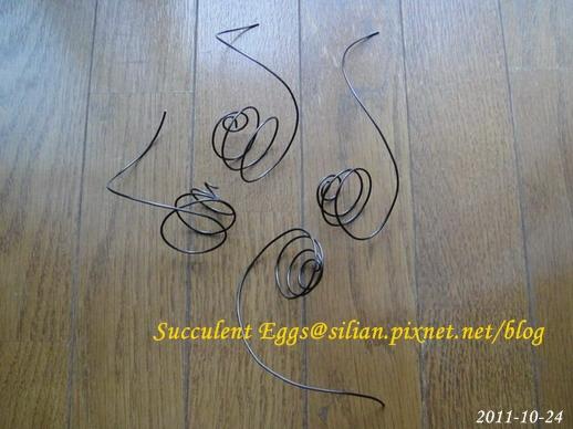 20111024 多肉掛蛋