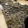 20111106 ISIJ 秋季仙肉販售會