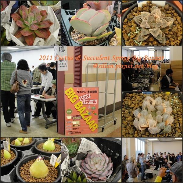 20111106 ISIJ 秋季仙人掌多肉植物販售會
