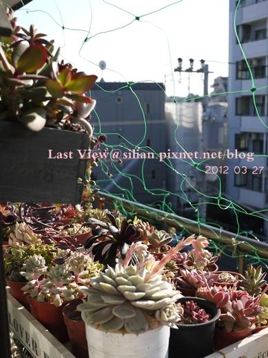 20120327 155953 Succulents