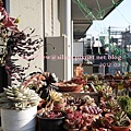 20120327 160043 Succulents